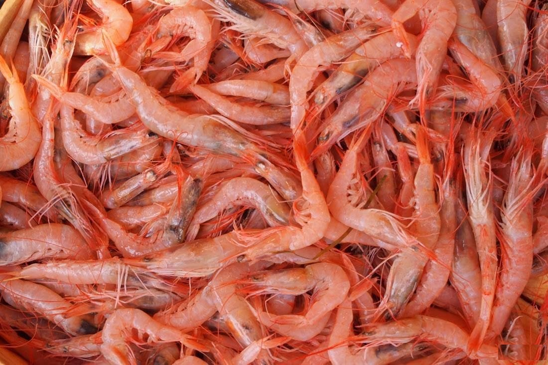 shrimp Men