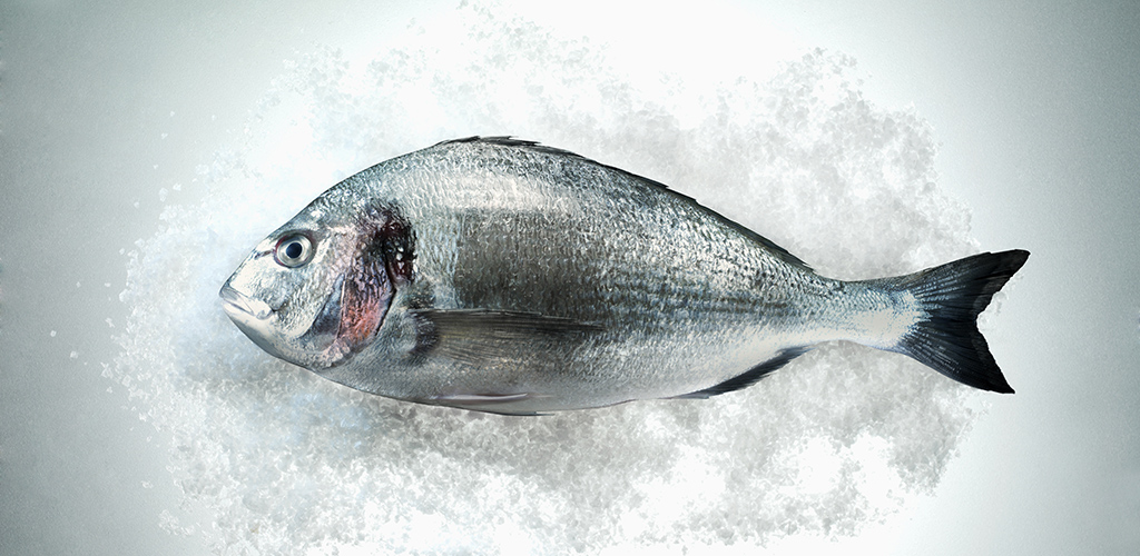Fresh Sea Bream