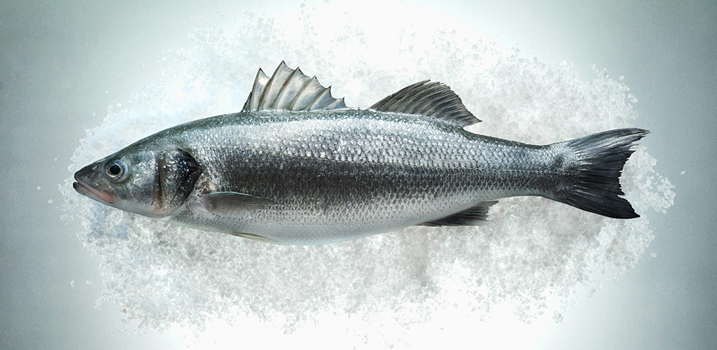 Fresh Sea Bass
